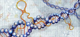 No longer junk: Role of long noncoding RNAs in autism risk